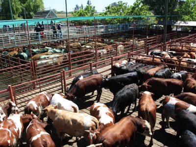 Feria Bulnes 6